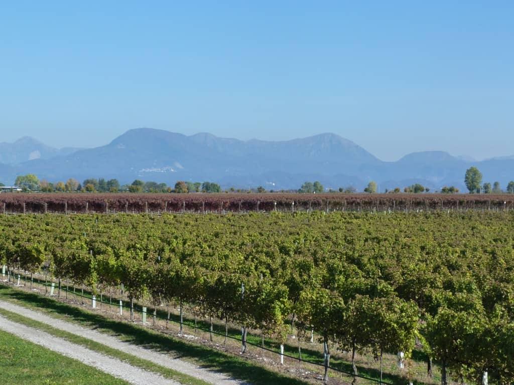 Vigneti Friuli