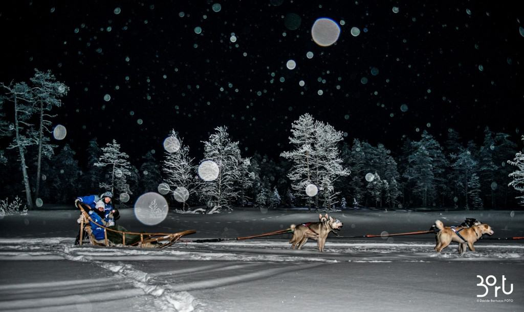 lapponia, notte, cani, alberi, neve
