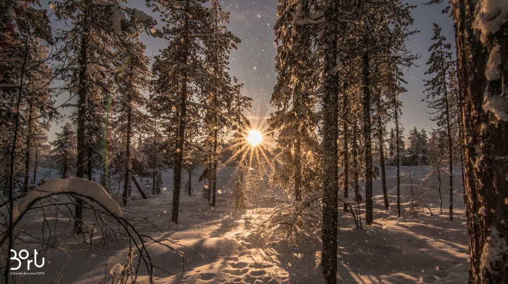 lapponia, paesaggio innevato, sole, raggi, neve, alberi