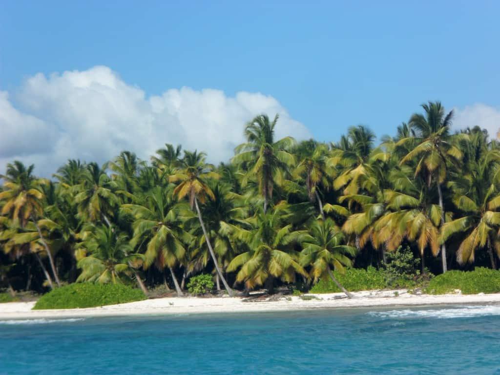km di palme e vegetazione