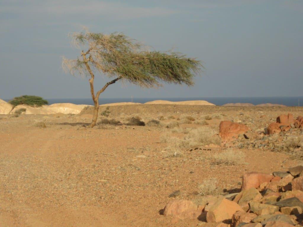escursione in quad nel deserto