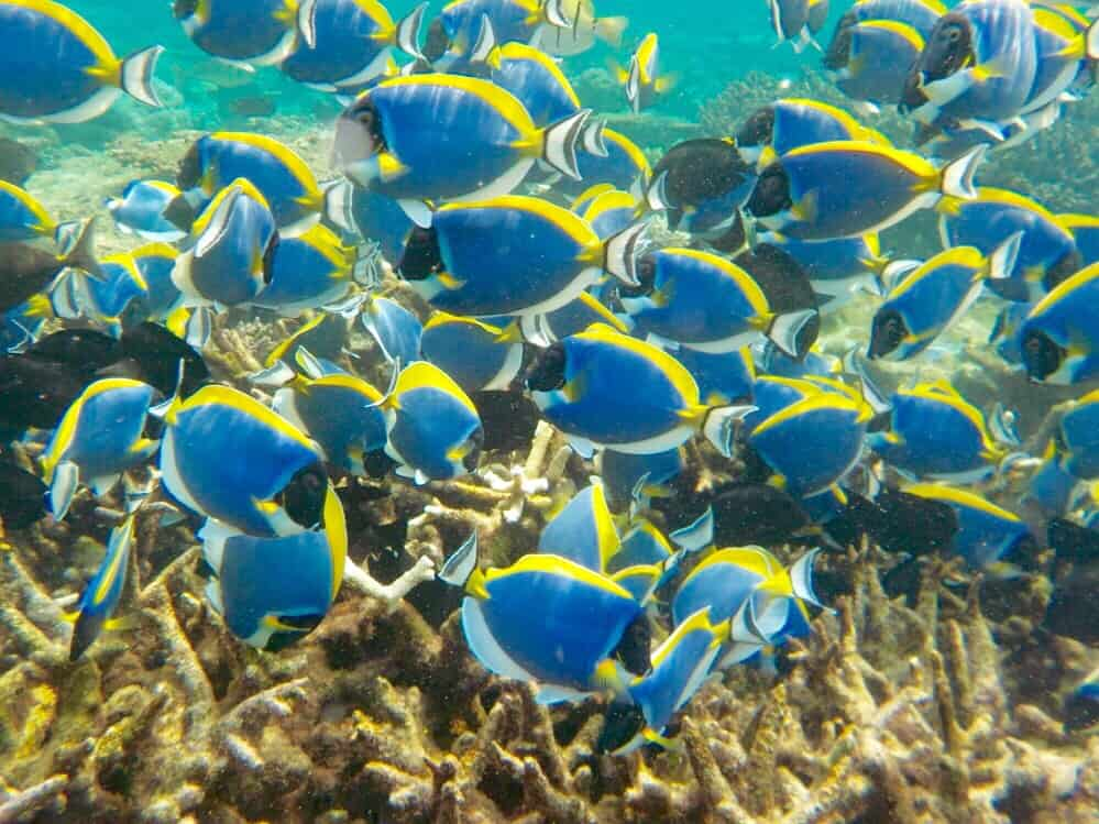 foto pesci maldive