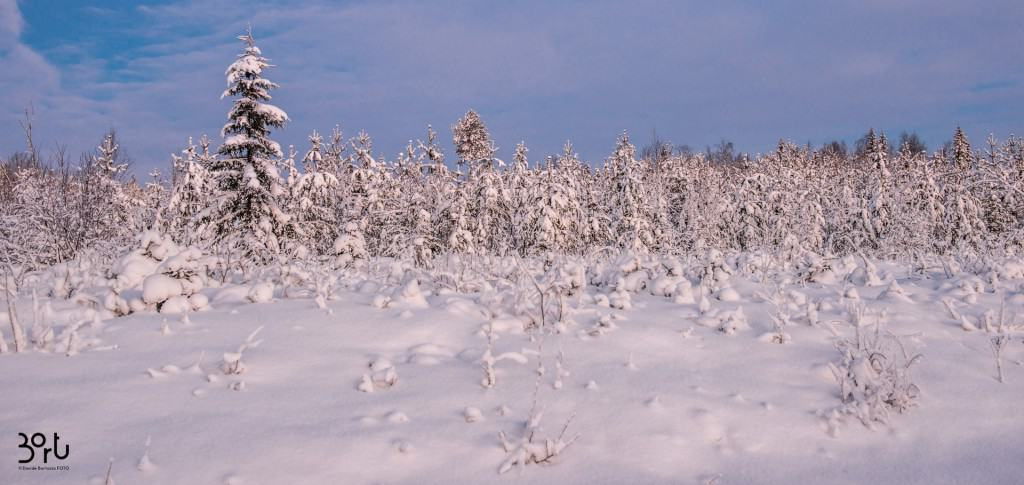 neve, paesaggio, lapponia, nevicata
