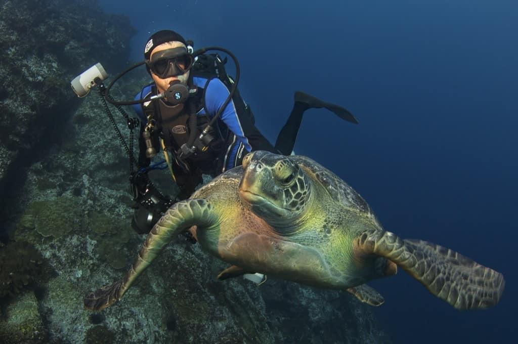 tartaruga, mare, costa rica