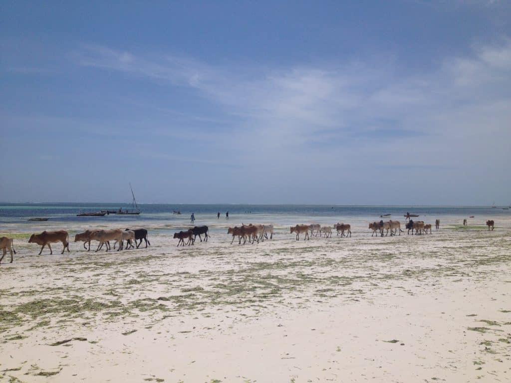 bassa marea, zanzibar, spiaggia