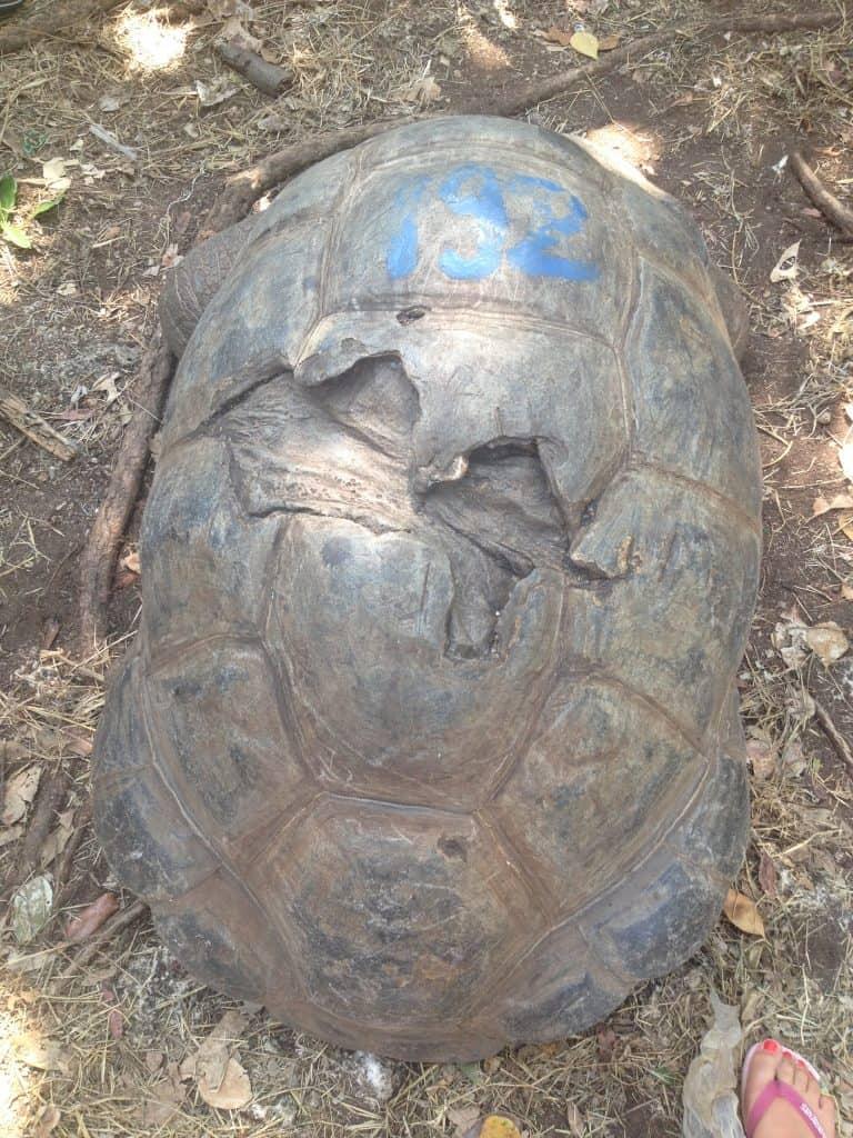 tartaruga, prison island, zanzibar, africa