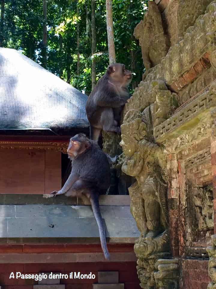 Sangeh Monkey Forest Bali